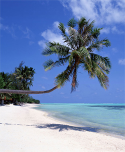 Palm-leaning-over-ocean